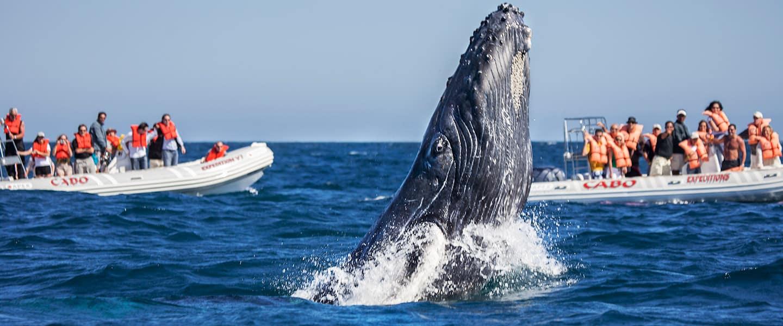 Whale Watching Wonders